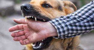 hiring a dog bite attorney